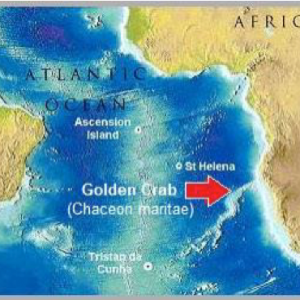Golden Crab Map